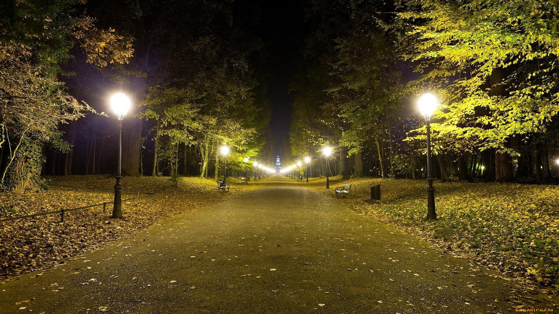 картинки ночного пар большая